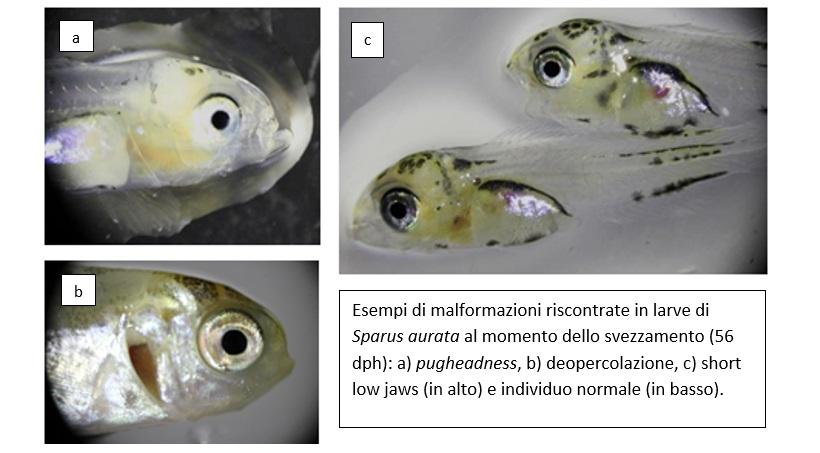 pesci allevamento deformazioni