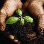 L'importanza della sostanza organica