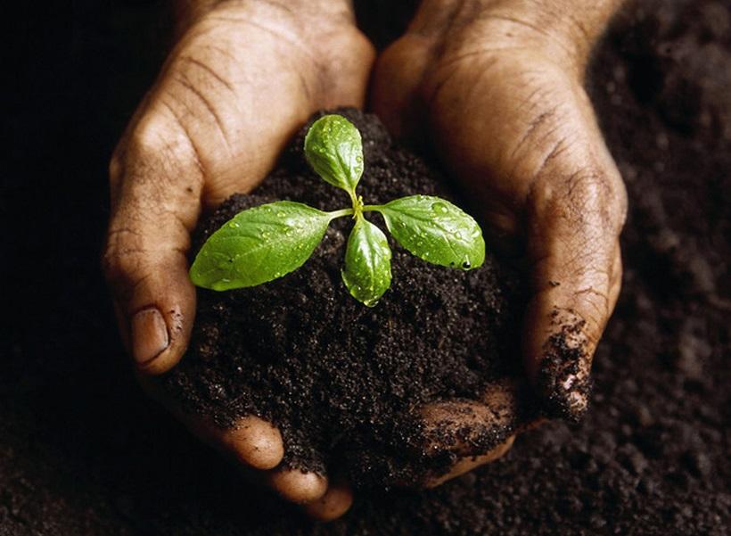 humus sostanza organica agricoltura piante