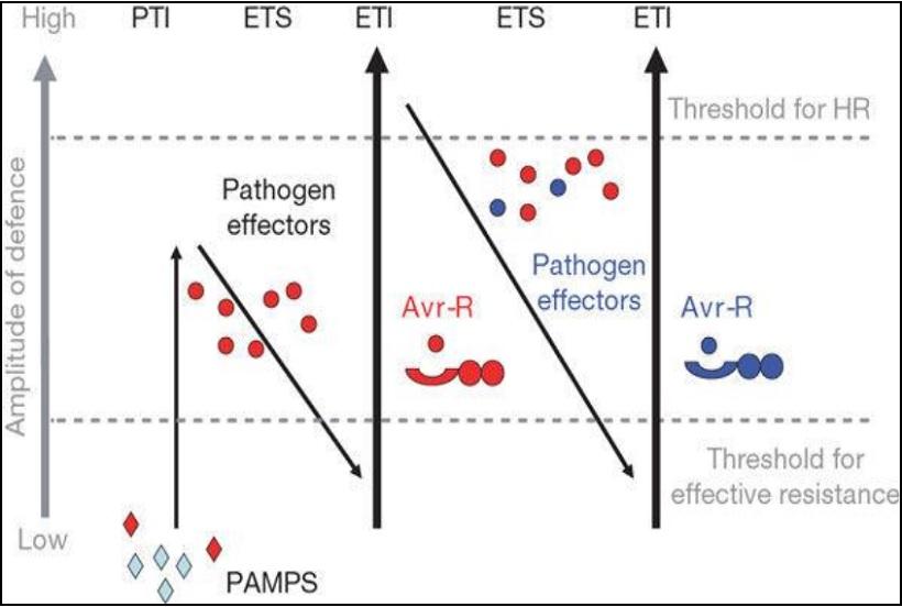 resistenza a peronospora e oidio in vite: selezione assistita da marcatori molecolari
