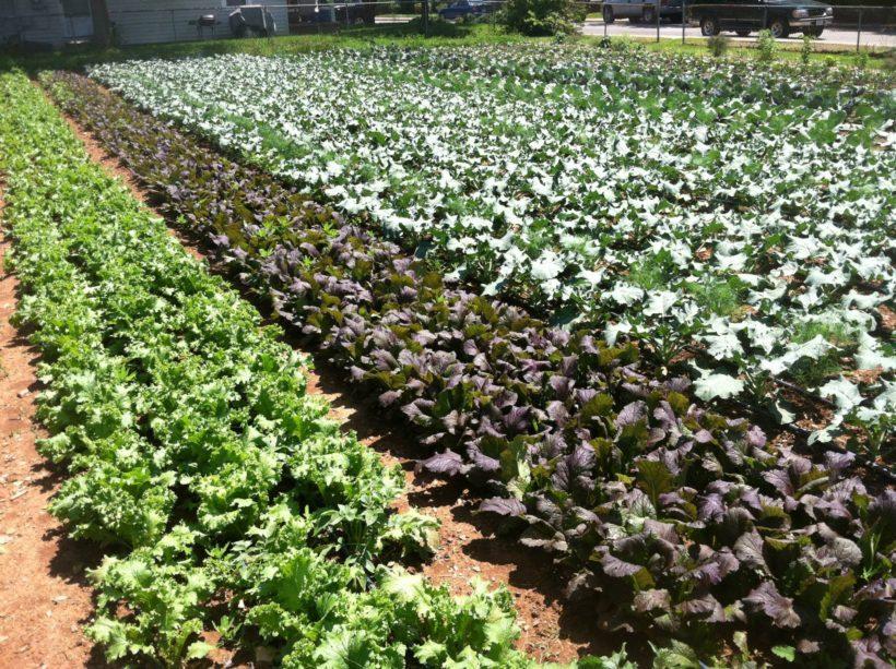 proprietà collettive agricoltura