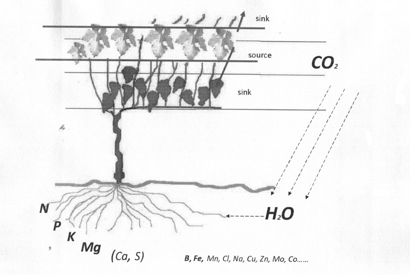 vite suolo uso