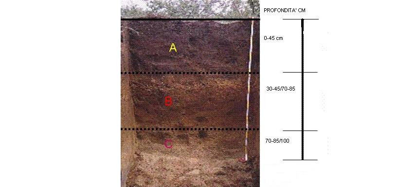 suolo orizzonte analisi
