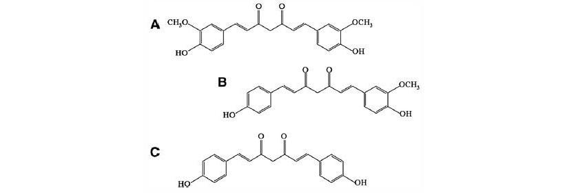 curcuma molecola attiva curcuminoidi