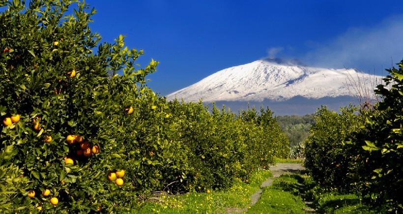 agrumeto agrumi arance sicilia italia