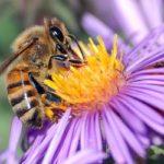 Api e ambiente: il monitoraggio ambientale con gli insetti