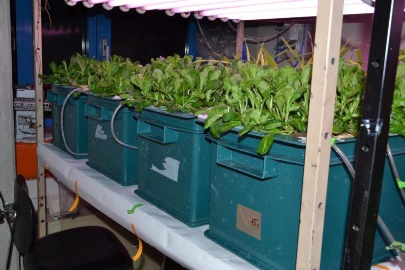 valerianella coltivazione integrazione concimi