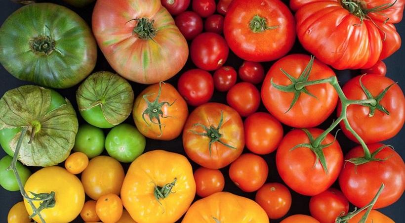 pomodoro varietà