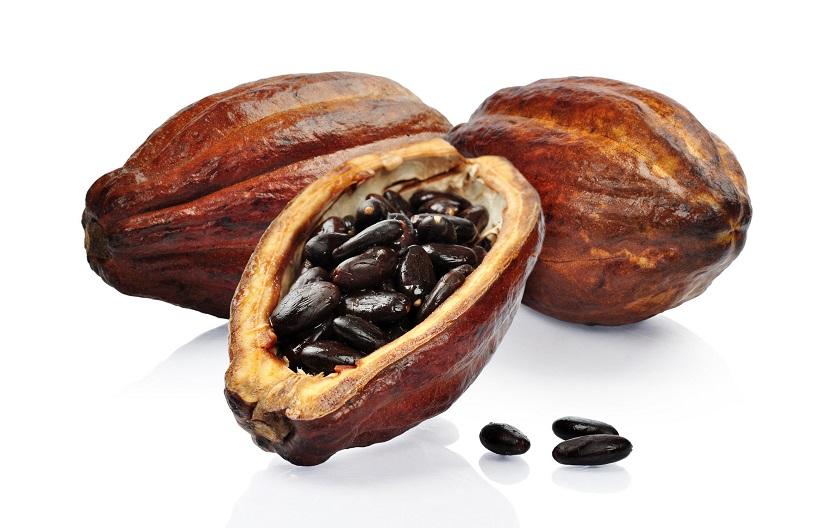 cacao frutto