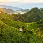 protocollo vinicolo 2018 conegliano valdobbiadene