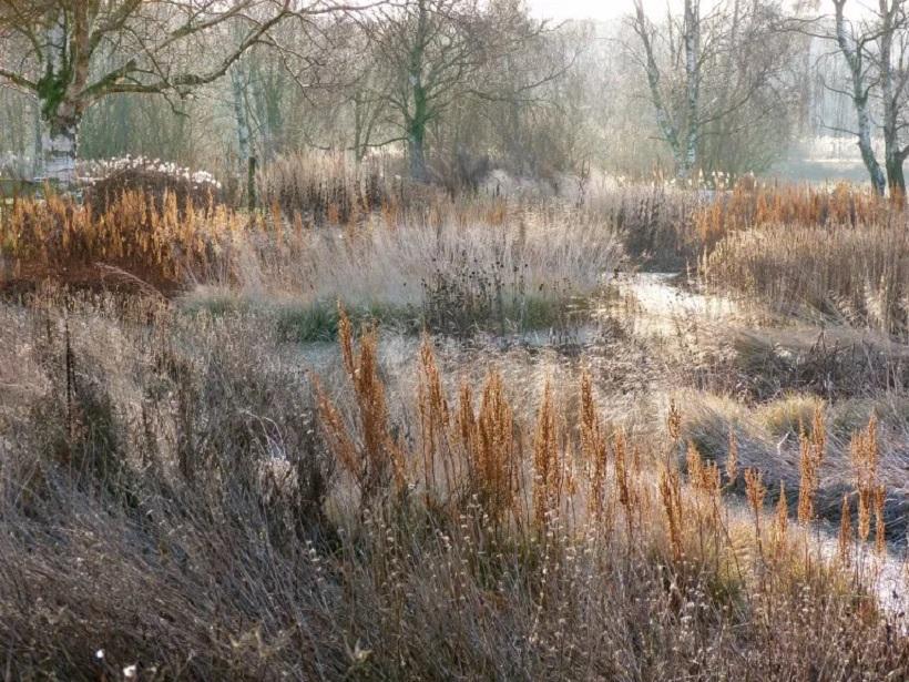 riserva naturale piante erbacee
