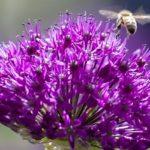 Erbacee perenni ornamentali: una risorsa per il giardino e per l'ambiente