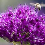 piante erbacee perenni fiori fioritura