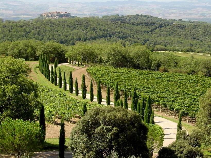 poggio antico vigneto vino montalcino brunello