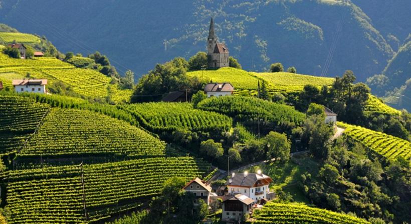 La sostenibilità in viticoltura