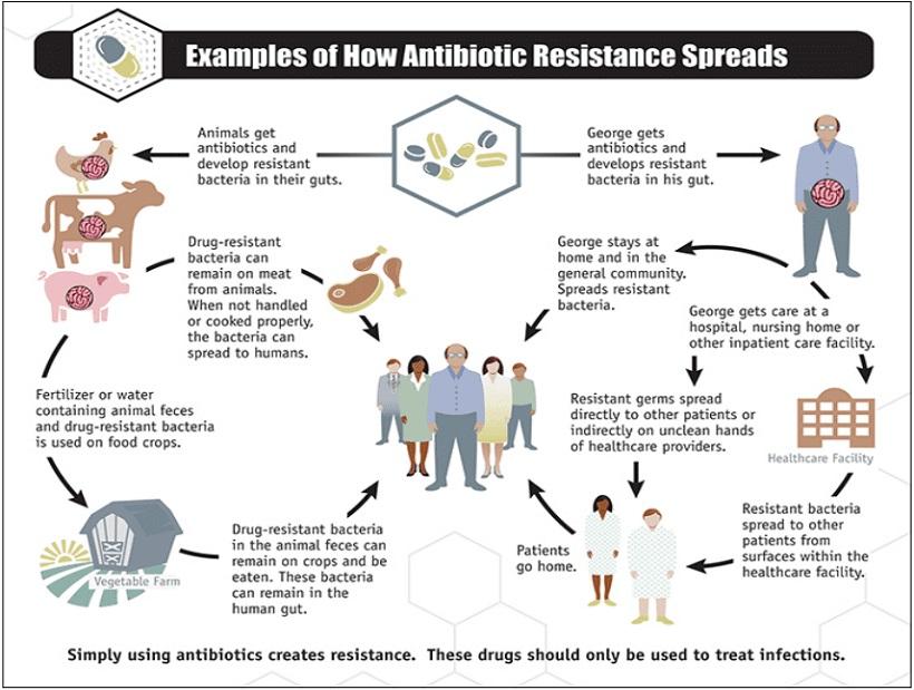 allevamenti resistenza antibiotici