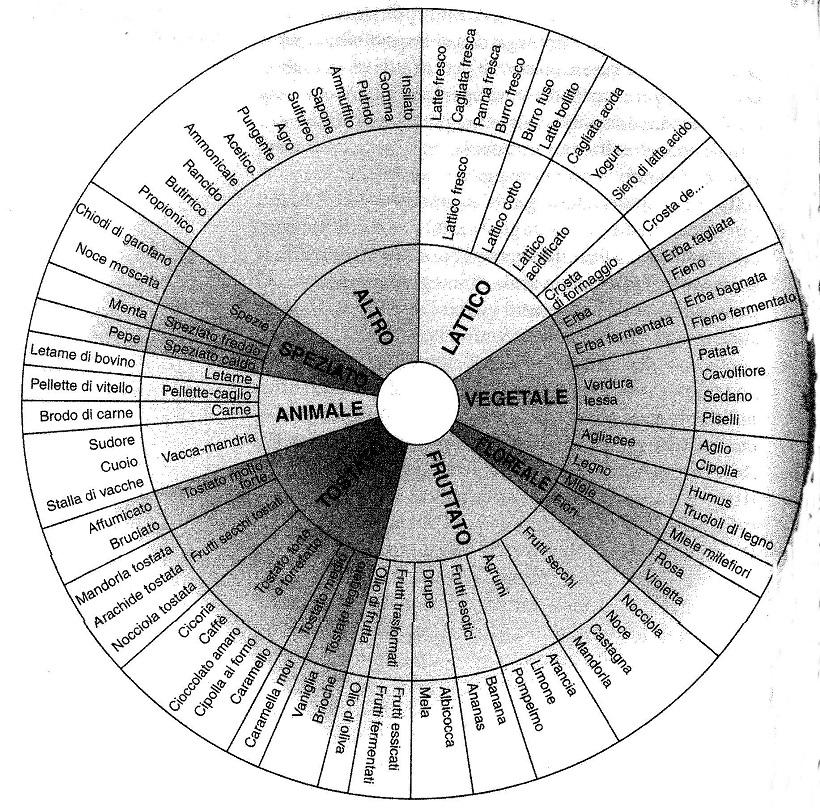 ruota descrittori odore aroma