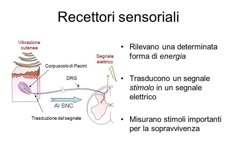recettori sensoriali degustazione agroalimentare