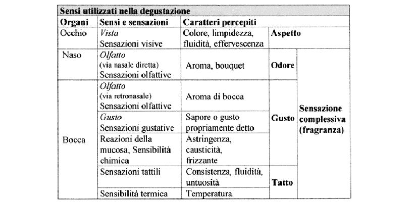 organi di gusto sensoriale