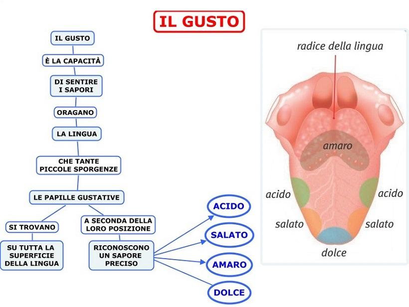 localizzazione sensori gusto lingua