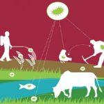 Allevamenti Zootecnici e la problematica della resistenza degli antibiotici