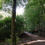 Gestione forestale e ricerca: primi passi per un modello di gestione sostenibile delle foreste produttive di faggio