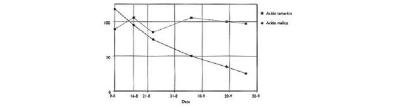 acidi maturazione uva andamento acino vino acidità