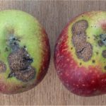 resistenza trattamenti fitofarmaci agricoltura