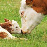 benessere animale allevamenti