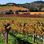 La California ed il vino: un connubio da provare