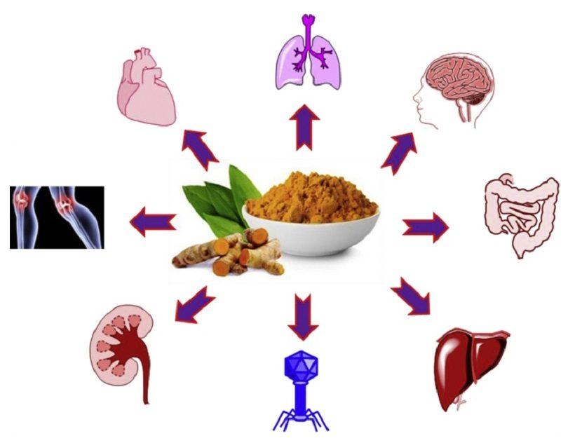curcuma dieta proprietà