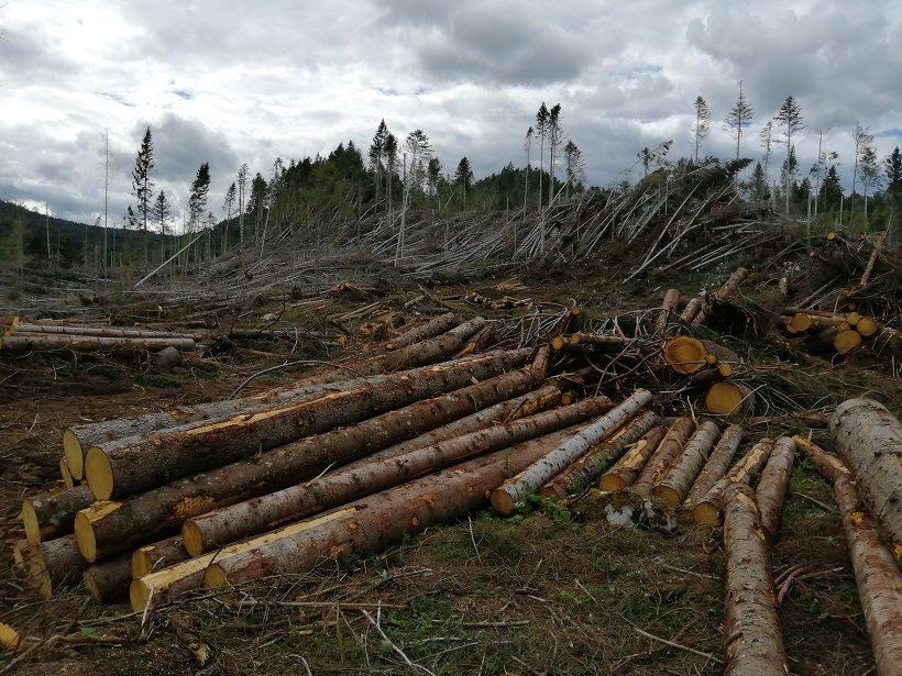 Bosco danneggiato in lavorazione presso Grigno (TN)