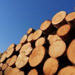 Il legno non è oro