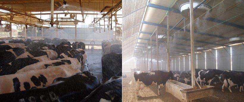 raffrescamento stalle bovini stistemi