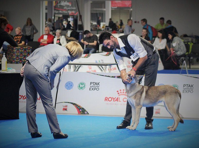 Giudice in esposizione canina