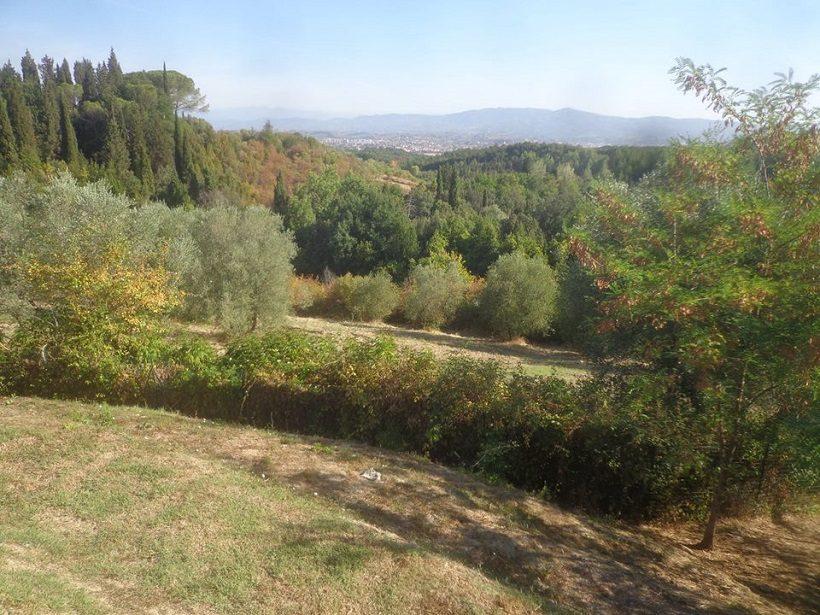 giardino non irriguo colline firenze olivi