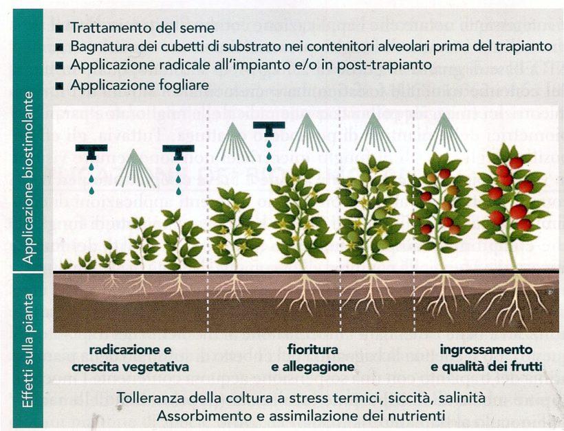 effetti stimolante piante biologico