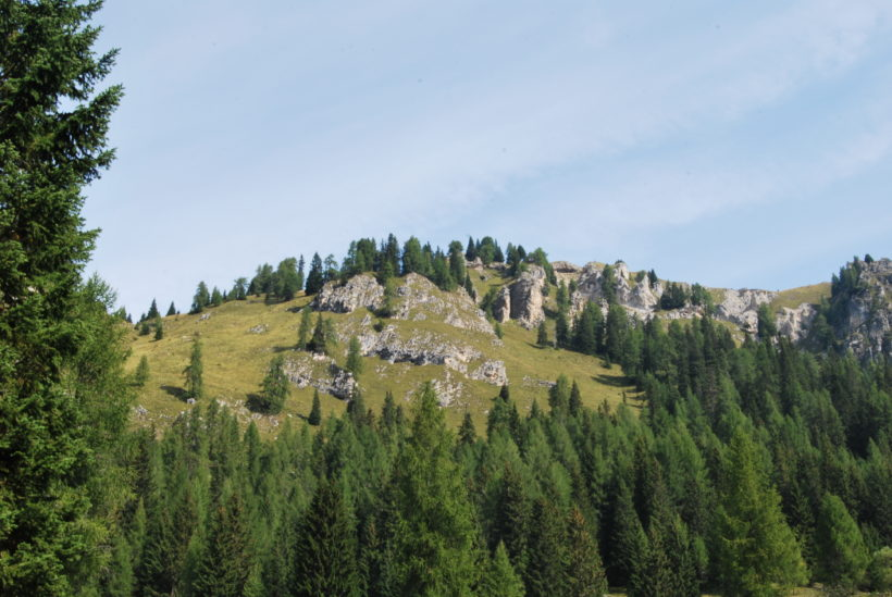 certificazione forestale bosco Luca Poli