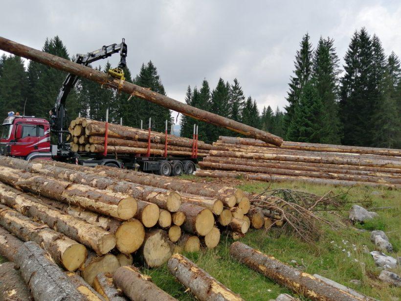 tronchi lunghi carico camion certificazione pefc fsc legno foresta