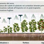 biostimolanti orticoltura orto piante fertilizzante concime