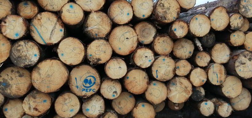 certificazione forestale pefc fsc