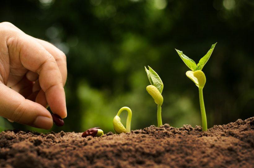 Semina delle piante