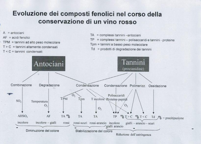 composti vino antociani legno