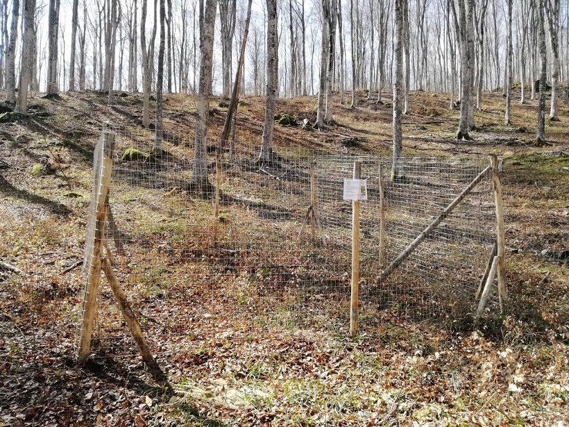 chiudenda bosco rinnovazione faggio amiata toscana