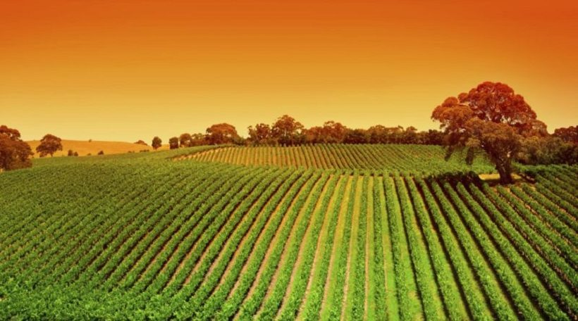 fosfiti agricoltura biologica biologico concimi