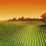 Spunti di riflessione su tema delle contaminazioni accidentali da fosfiti in agricoltura biologica
