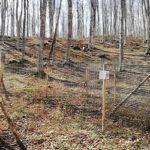 rinnovazione faggio bosco monte amiata toscana università tuscia viterbo forestale