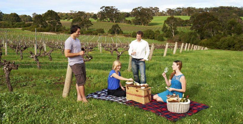 vigneto australia vino