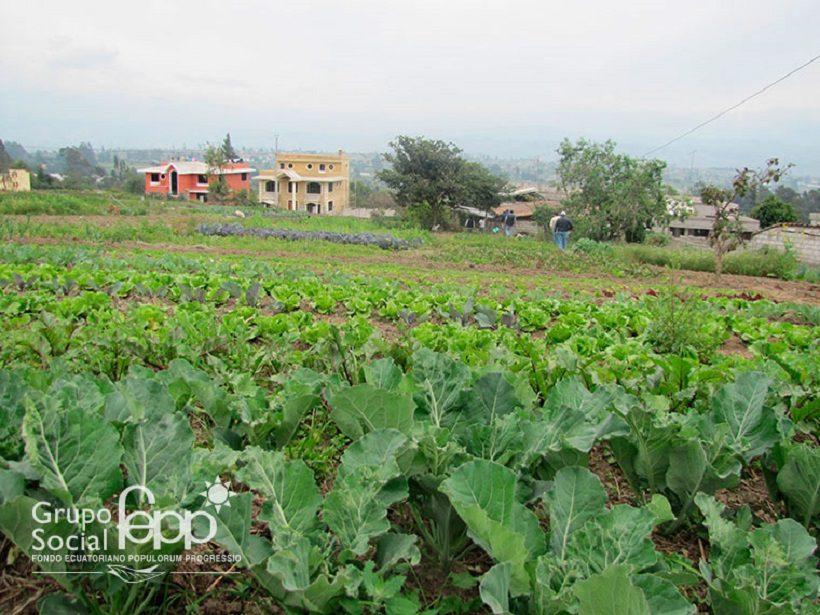 equador campi agricoltura