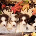 cinofilia cani allevamento